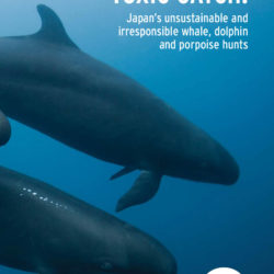 Front cover of our report entitled Toxic Catch: Japan's unsustainable and irresponsible whale, dolphin and porpoise hunts