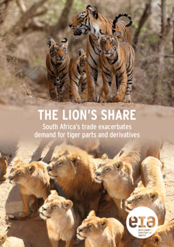 Front cover of our report entitled The Lion's Share: South Africa's trade exacerbates demand for tiger parts and derivatives