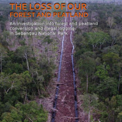 Front cover of our report entitled The Loss of our Forest and Peatland: an investigation into forest and peatland conversion and illegal logging in Sebangua National Park