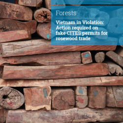 Front cover of our report entitled Vietnam in Violation: Action required on fake CITES permits for rosewood trade