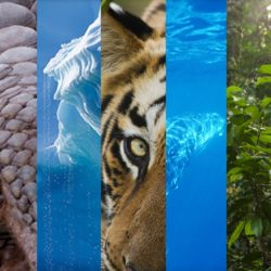 EIA banner with small rectangular pictures of a forest, a whale, a pangolin, ice blocks, a tiger and an elephant