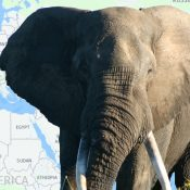 Illegal trade seizures: Elephant ivory in Europe