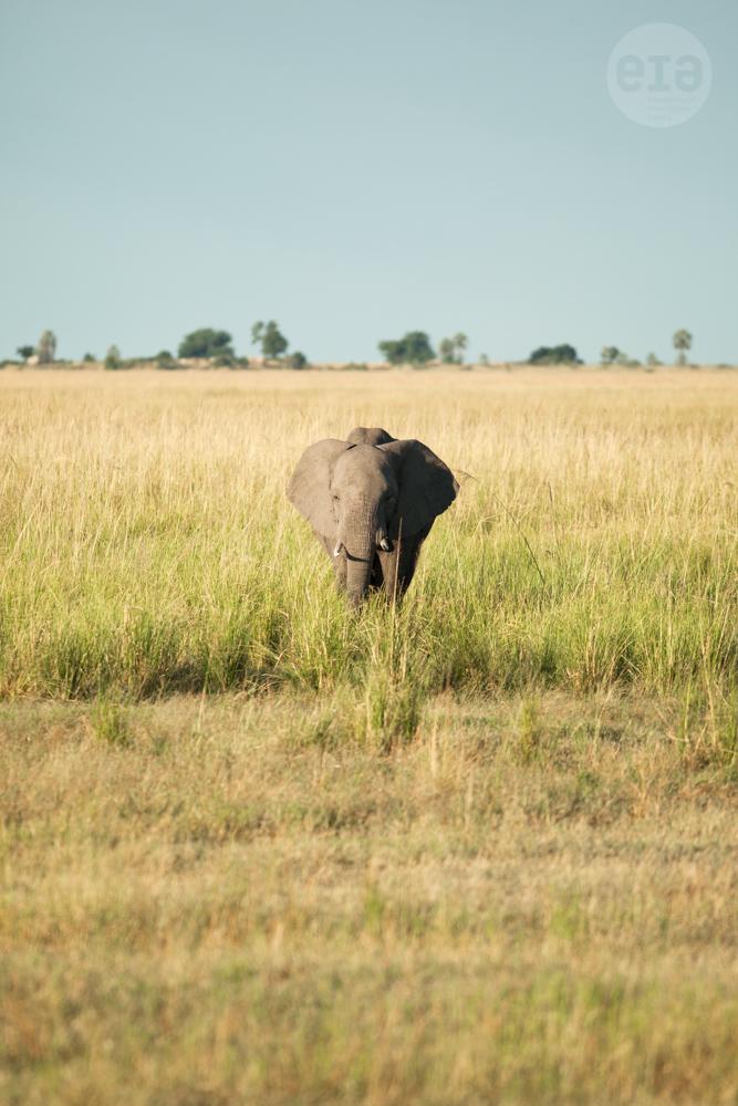 Elephants, Chobe, Botswana, March 2015 (4)