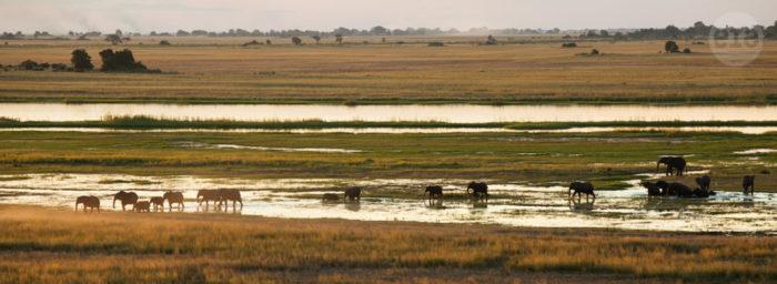 Elephants, Chobe, Botswana, March 2015 (6)