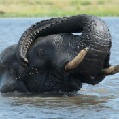 Chobe elephants a powerful reminder of what we fight for