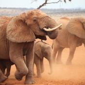 Public action critical to close UK ivory market, as consultation launches