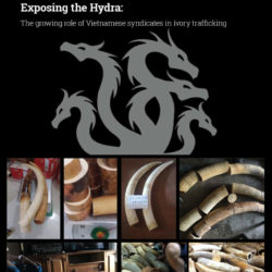 Exposing the Hydra report cover