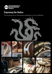 Exposing the Hydra – The growing role of Vietnamese syndicates in ivory trafficking