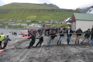 Pulling pilot whales ashore (via www.nordlysid.fo)