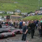 Action alert: Tell Faroese Govt to end slaughter of whales