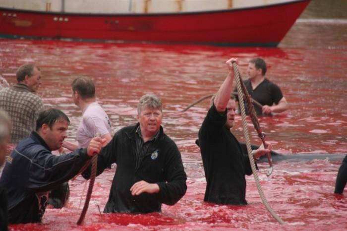 Faroe Islanders working in the water at Fuglafjørður (via www.nordlysid.fo)