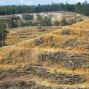 Palm oil plantation crime drives illegal logging in Indonesia