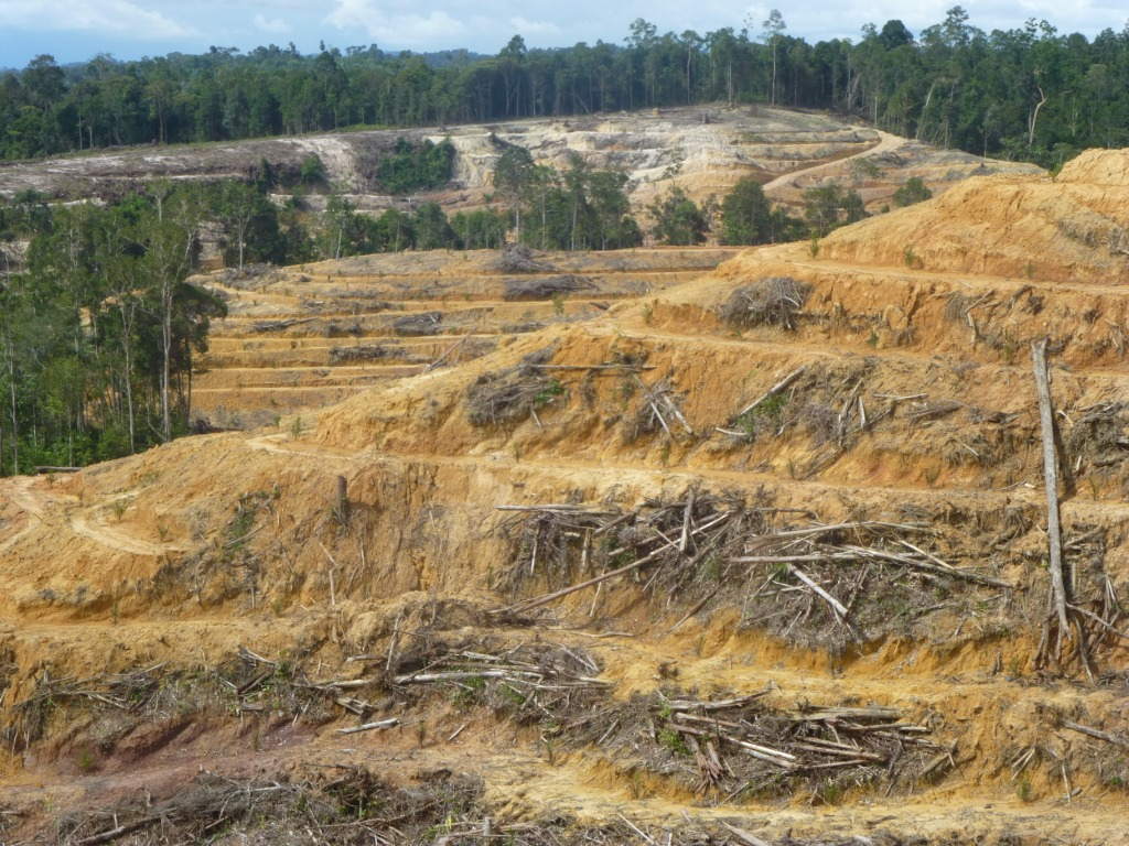 international environmental law case studies International environmental law also is the most influential case for australian environmental law preparation of periodical reports and studies on.
