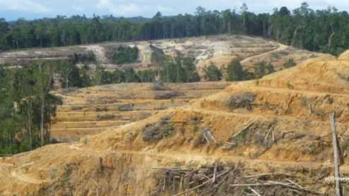 Forest land cleared for palm oil, Indonesia