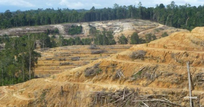 Forest land cleared for palm oil, Indo