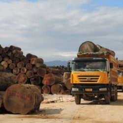 Fresh teak logs, Nongdao, Myanmar, June 2015