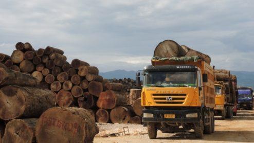 Fresh teak logs, Nongdao, Myanmar, June 2015