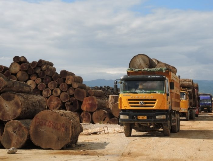 Fresh teak logs, Nongdao, Myanmar, June 2015 (c) Environmental Investigation Agency