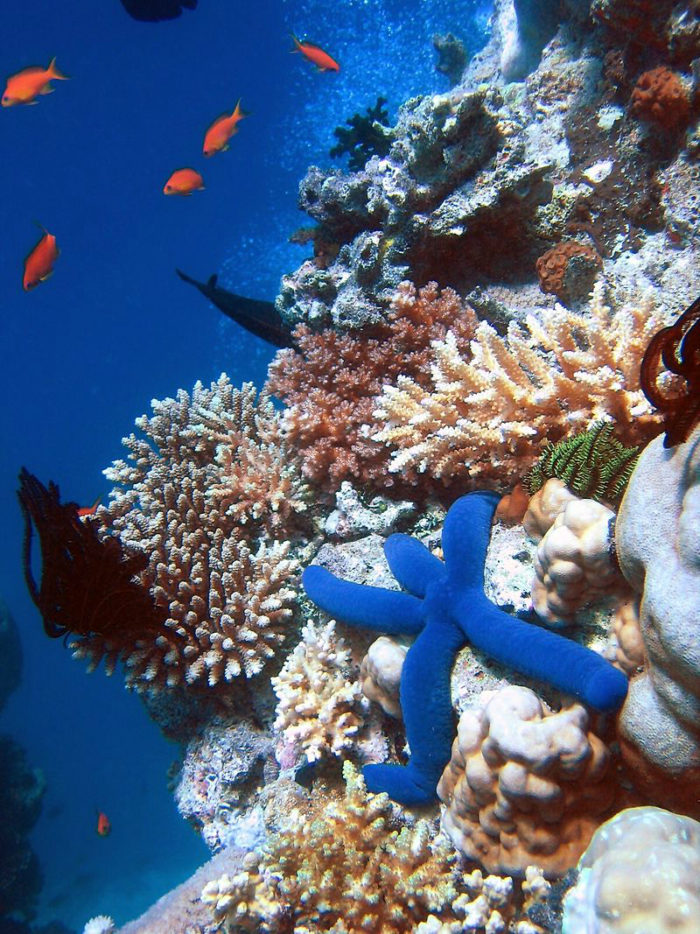Great Barrier Reef (c) Richard Ling