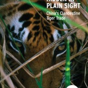Hidden in Plain Sight: China's Clandestine Tiger Trade
