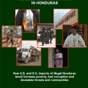 The Illegal Logging Crisis in Honduras