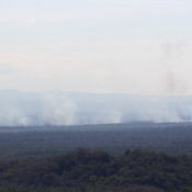 Illegal fires put 'sustainable' palm oil in the hot spot