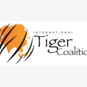 International Tiger Coalition says tiger summit can reverse crisis of poaching and illegal trade