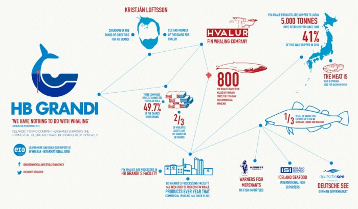 Iceland whaling infographic (c) EIA