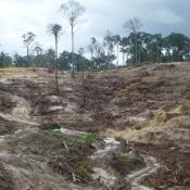 Will the RSPO ever stop palm oil from causing deforestation? Its new draft standard suggests not