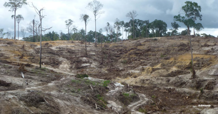 Indo palm oil deforestation