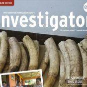 The Autumn 2017 issue of Investigator is now available!