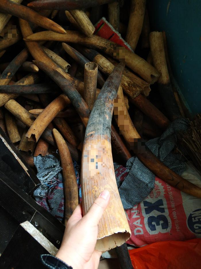 ivory, nigeria