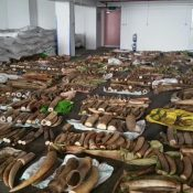 Illegal wildlife seizures need to drive criminal investigations, not just photo opportunities
