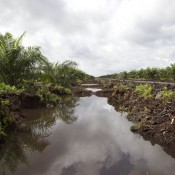Unchallenged crimes of 'rotten apple' palm oil company
