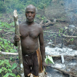 Ravaged forests of the Knasaimos community, West Papua, Indonesia, 2007