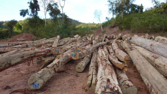 Lagerstroemia logs, Laos (c) EIA