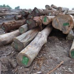 Illegal logs from Lao.