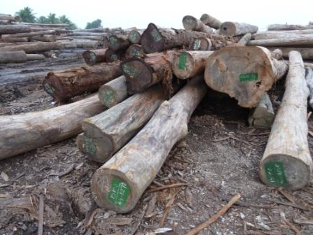 Lao logs owned by Vietnamese military company, Qui Nhon port, Vietnam, 2010 (c) EIA