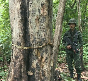 Guarding Thailand's largest remaining rosewood tree (c) Roger Arnold