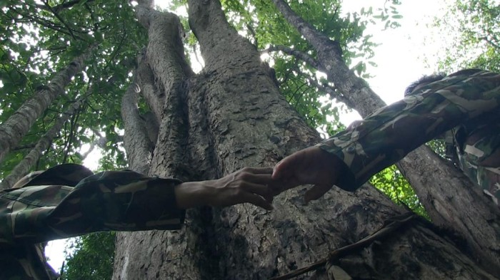 Thailand's largest remaining rosewood tree, near the Cambodian border, is now guarded 24 hours a day by a platoon from the Thai Army (c) Roger Arnold