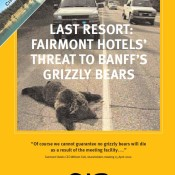 Last Resort: Fairmont Hotels' Threat to Banff's Grizzly Bears