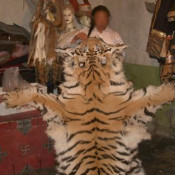 China reopens trade in tiger and leopard skins