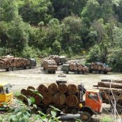 Myanmar logging ban a major step to forest sector reform