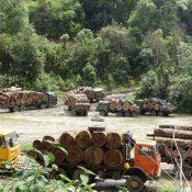 Sweden prosecutes Myanmar teak trader