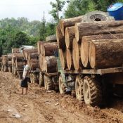 Cash from chaos: The illicit trade in timber from Myanmar to China