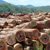 Leaked report reveals huge scale of illegal logging in Laos