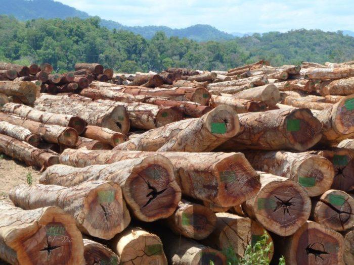 Logs cuts by Vietnamese company COECCO, Xe Kaman 1 dam area, April 2011 (c) EIA