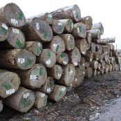 Timber smuggling from Laos to Vietnam, in a military style