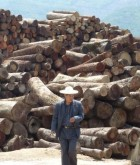 Logs smuggled across the land border from Myanmar into Yunnan province, China, April 2012 (c) EIA - crop
