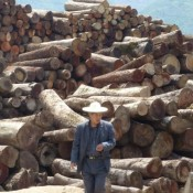 China needs new laws to tackle illegal logging